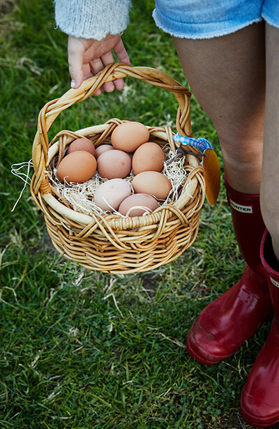 Basket of eggs from our Mar Vista chickens