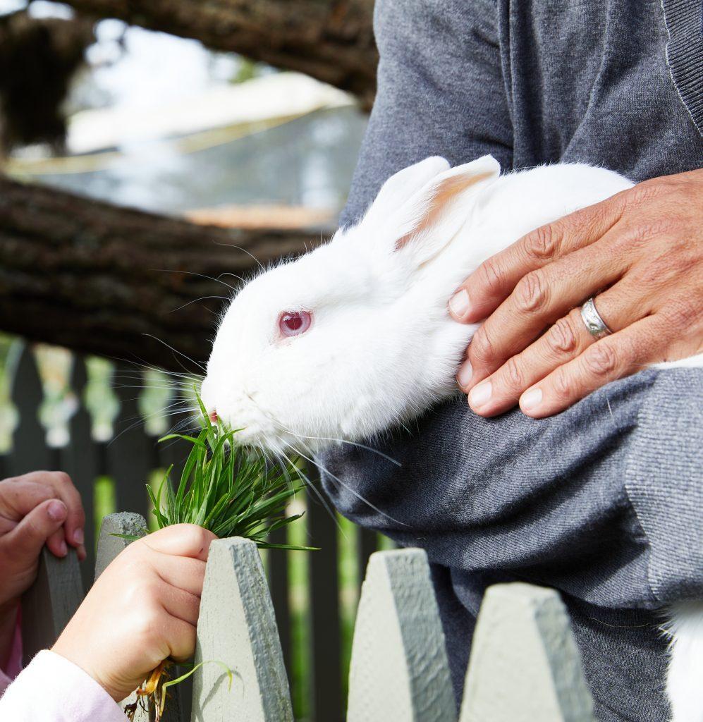 Feeding grass to Charlie the Rabbit